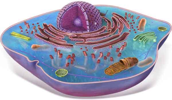 Foto de Introdução à biologia celular