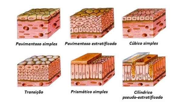 O que são células epiteliais