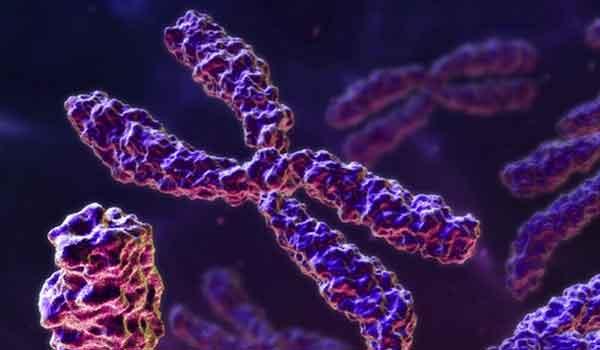 Foto de Genoma e DNA genômico