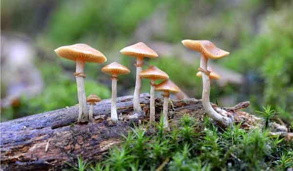 Foto de Reino dos Fungos – Resumo: características, classificação exemplos