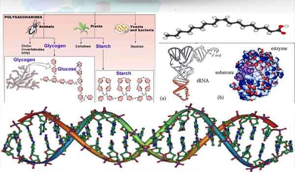 Foto de Moléculas Biológicas – Tipos, funções – Resumo