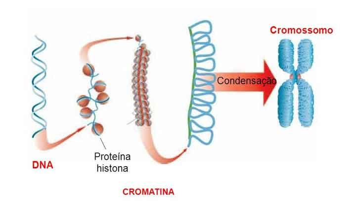 Foto de Organização e Estrutura do DNA
