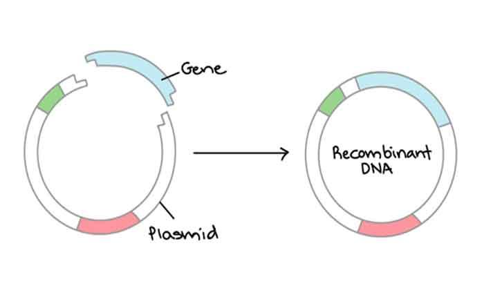 Foto de O que é DNA recombinante: como funciona