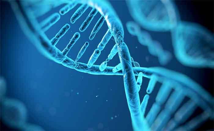 Foto de O que é Epigenética: Definição, exemplos história