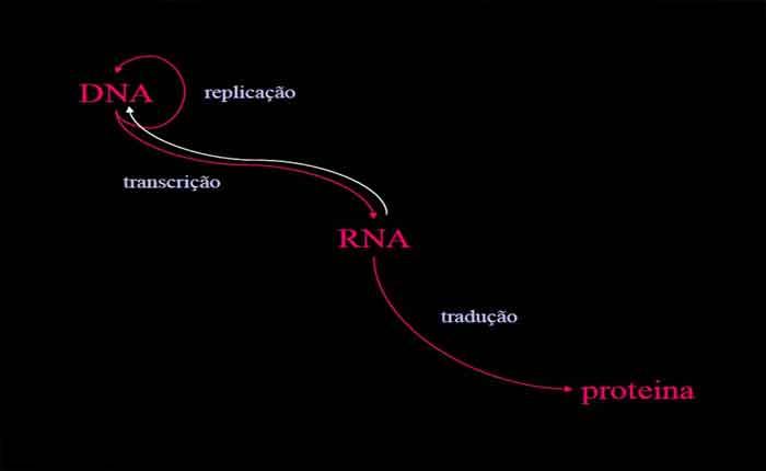Foto de Regulação da expressão gênica: como o genes são regulados