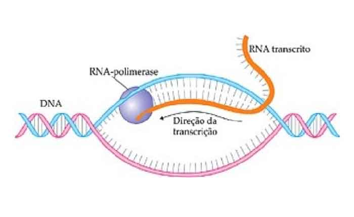 Foto de Transcrição do DNA: o que é, como acontece, pra que serve