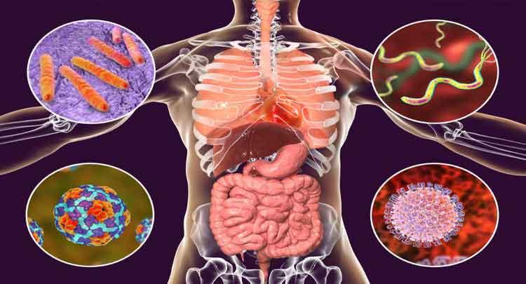 Foto de Doenças Bacterianas em Humanos