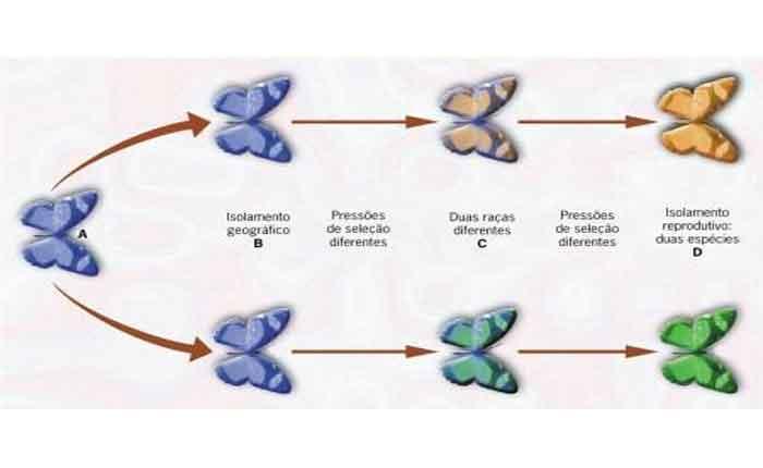 O que é especiação: simpátrica, alopátrica, tipos - Resumo