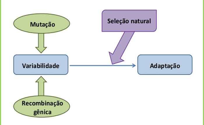 Foto de A Teoria Sintética da Evolução