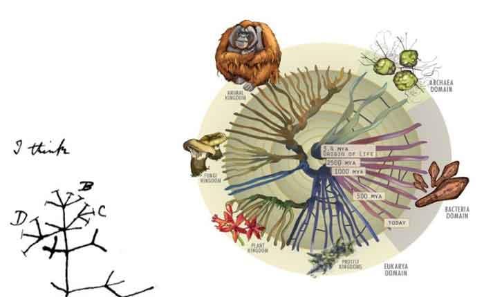 Foto de Mecanismos de Evolução Biológica